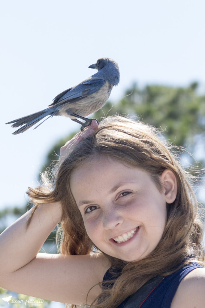 My daughter with a Florida scrub-jay on her head
